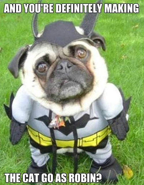 dogs batman animal costumes - 6639051776