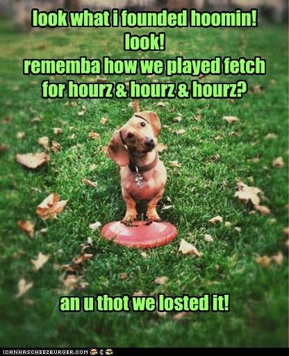 dachshund grass frisbee playing - 6639191296