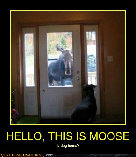 hello this is dog moose animals - 6639326464