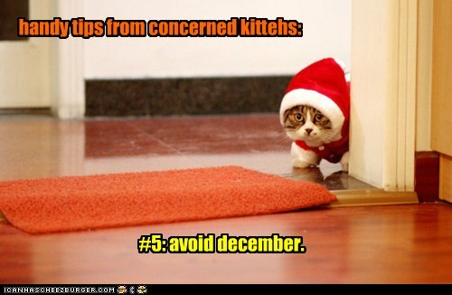 handy tips from concerned kittehs: #5: avoid december.