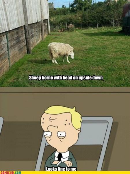 upsidedown sheep TV relative - 6639390976
