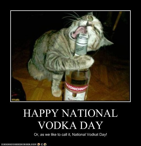alcohol booze captions Cats drinking holidays national vodka day vodka