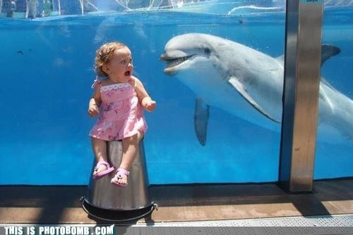 animal,dolphin,kid