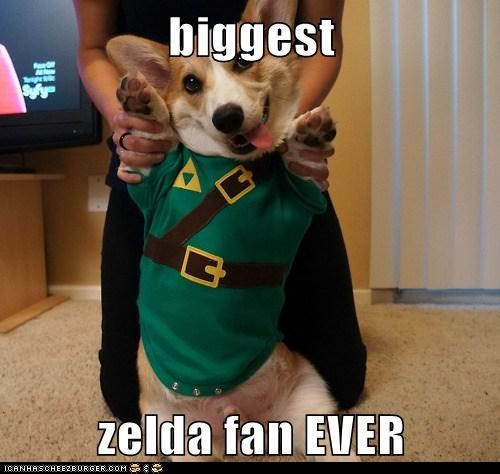 costume,dogs,link,videogame,cosplay,legend of zelda,corgi,zelda