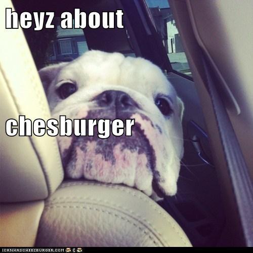 Cheezburger Image 6641357568