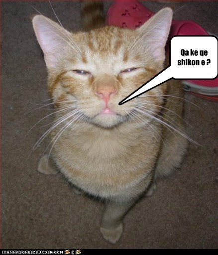 Cheezburger Image 6641829120