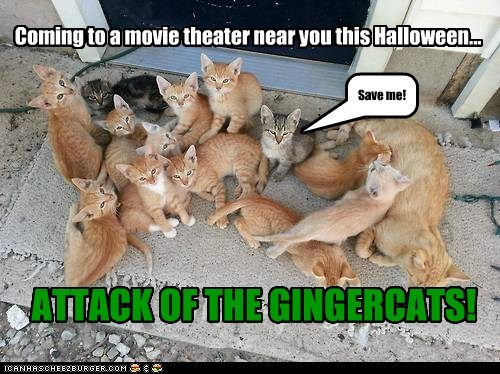 Coming to a movie theater near you this Halloween... ATTACK OF THE GINGERCATS! Save me!