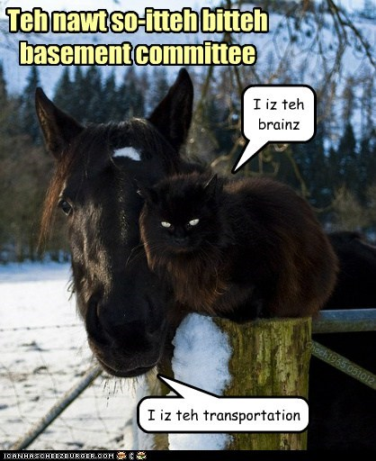 brains,transportation,basement cat,basement,Cats,captions,horse