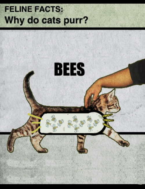 science bees Cats purring