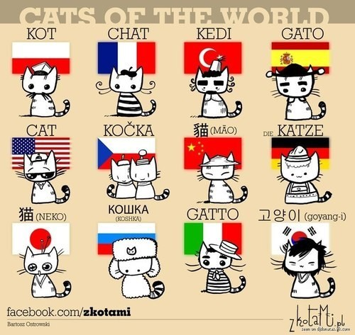 languages,Cats,world,translations,words,cute