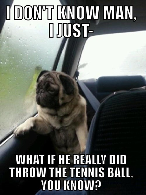 pugs dogs introspective Memes windows what if balls fetch Sad thinking captions - 6642831104