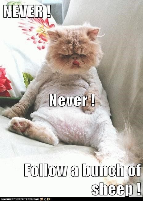 Cheezburger Image 6642898176