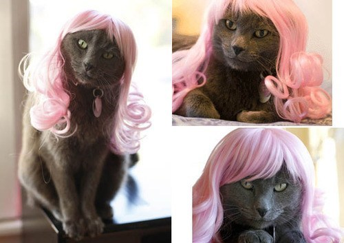 cat,wig,pink hair