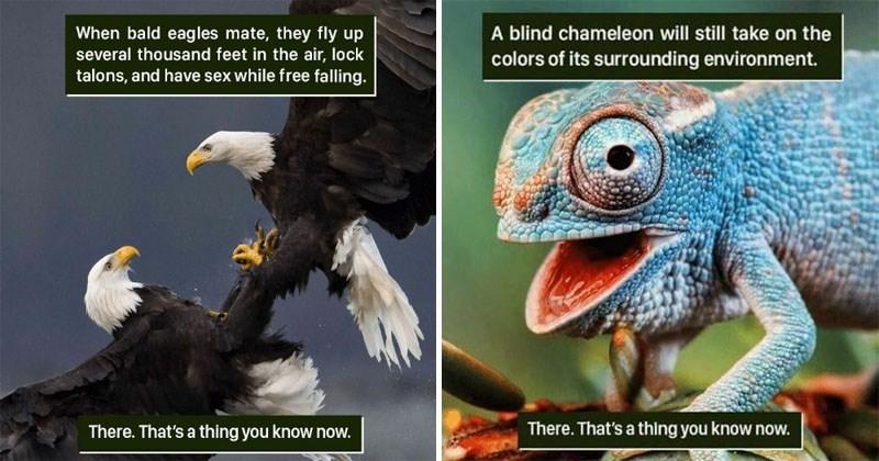 Weird animal facts, fun animal facts.