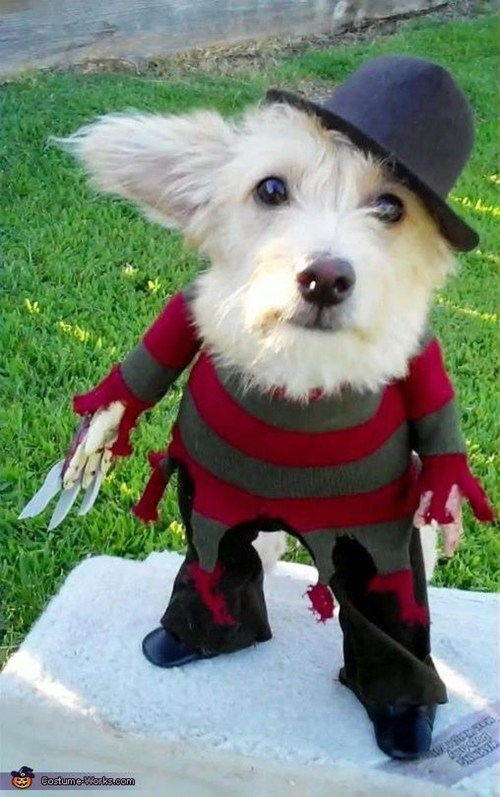 freddy kreuger dog costumes categoryimage - 6643241472