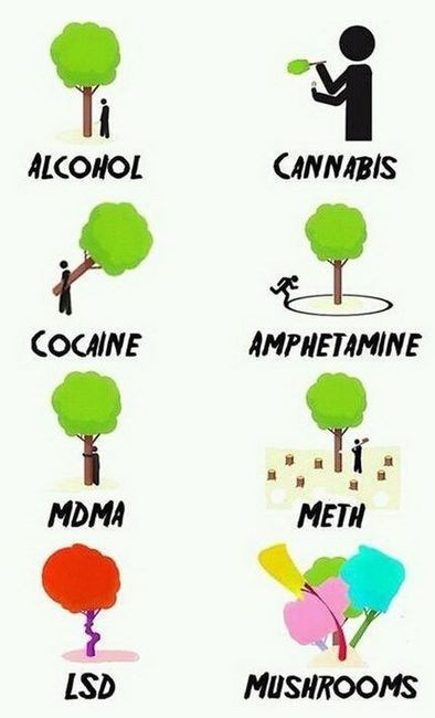 drugs and alcohol cannabis mdma meth Mushrooms lsd trees categoryimage