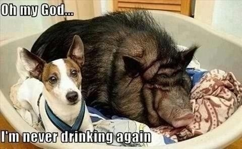 Every Damn Time never drinking again pig dogs oh my god