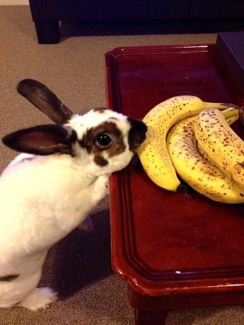 happy bunday rabbit bunny banana thief caught in the act - 6643354112
