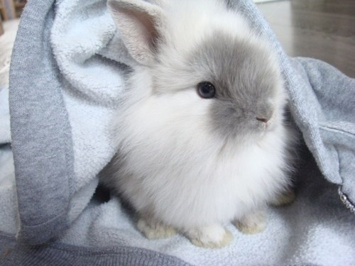 happy bunday,hoodies,rabbit,bunny,comfy,clothes