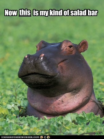 hungry,fat,salad bar,eating,happy,hippo