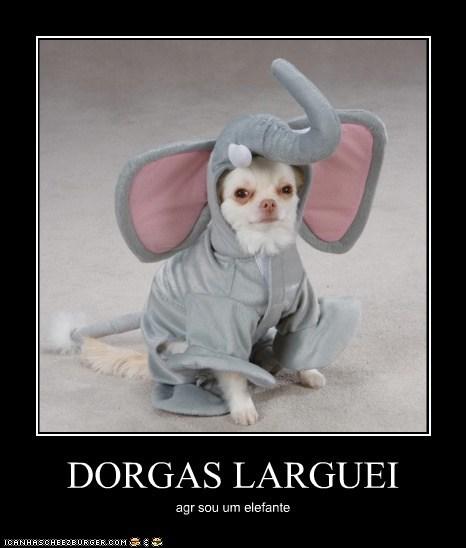 DORGAS LARGUEI agr sou um elefante