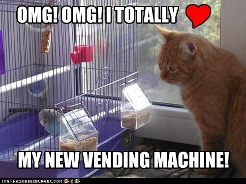 vending machine bird cage bird cage parakeet Cats captions birds - 6644116480