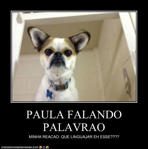PAULA FALANDO PALAVRAO MINHA REACAO: QUE LINGUAJAR EH ESSE????