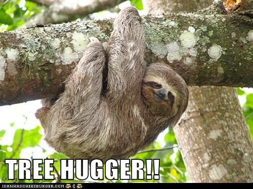 tree hugger climbing literal accurate sloth