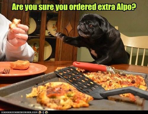 Cheezburger Image 6644811008