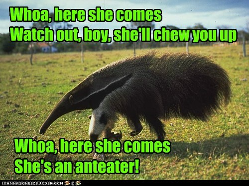 Whoa, here she comes Watch out, boy, she'll chew you up Whoa, here she comes She's an anteater!