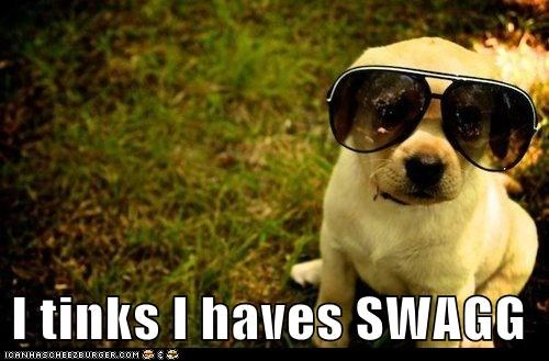 dogs,sunglasses,swag,puppy,golden lab