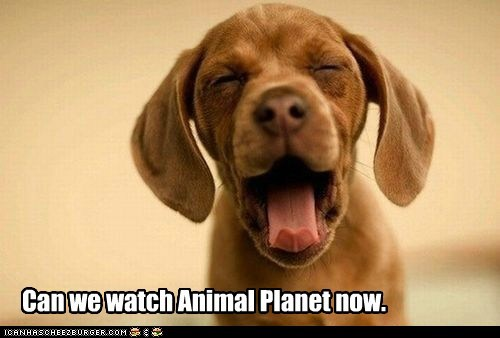 dogs puppy tv shows animal planet televison what breed