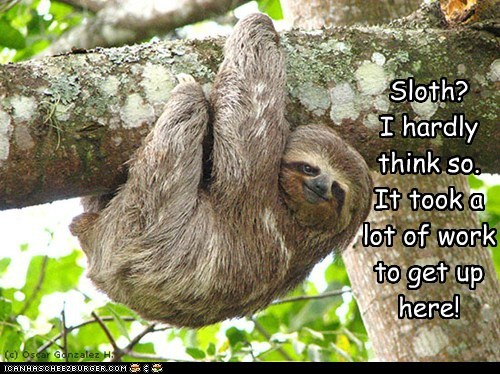 climbing hardly tired tree hard work sloth - 6645454080