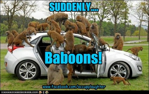 SUDDENLY.... Baboons! www.facebook.com/occupylaughter