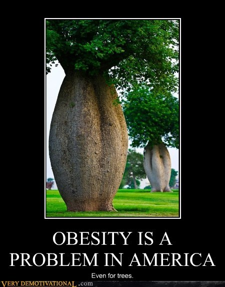 OBESITY IS A PROBLEM IN AMERICA Even for trees.