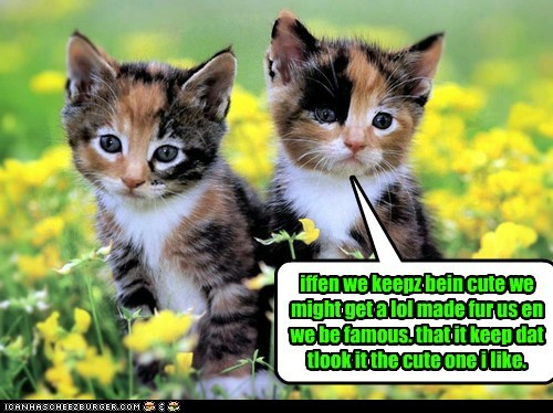 kittehs hopen fur a lol