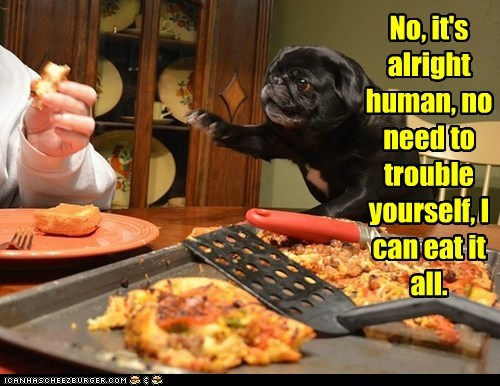 dogs,pug,pizza,all mine,food