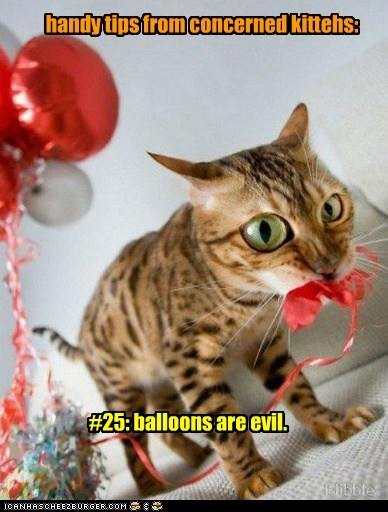handy tips from concerned kittehs: #25: balloons are evil.