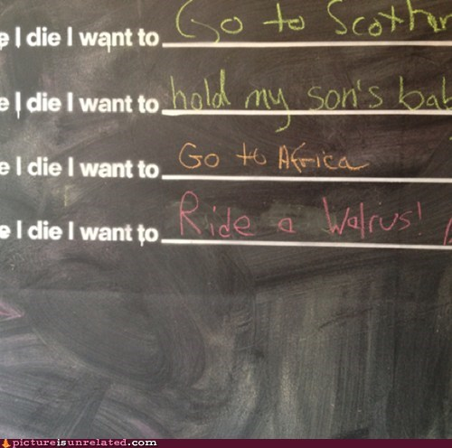 sounds like fun,walrus,bucket list