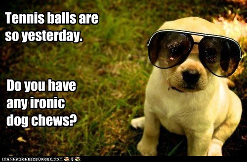 dogs,sunglasses,ironic,puppy,Hipster Dog,golden lab