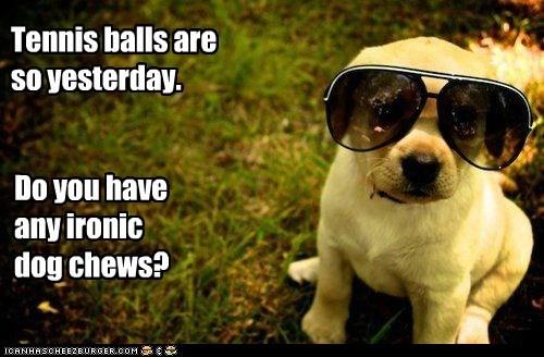 sunglasses ironic puppy Hipster Dog golden lab - 6646798080