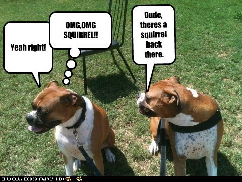 Dude, theres a squirrel back there. Yeah right! OMG,OMG SQUIRREL!!