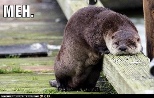 slumped meh otter bored