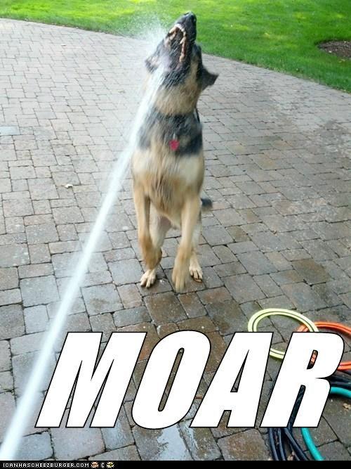 dogs german shepherd moar water hose - 6647239680