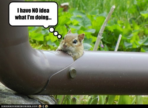stuck,chipmunk,confused,pipe,i have no idea what im doing