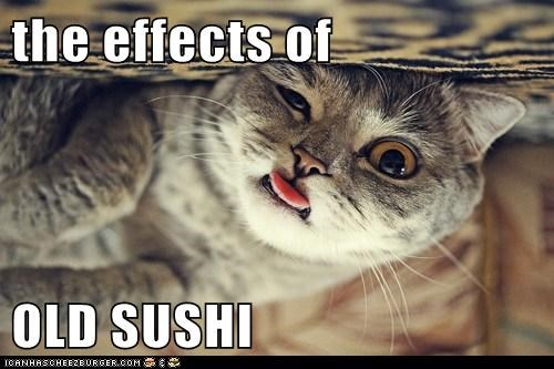 sushi fish gross old spoiled food noms Cats captions - 6647461120