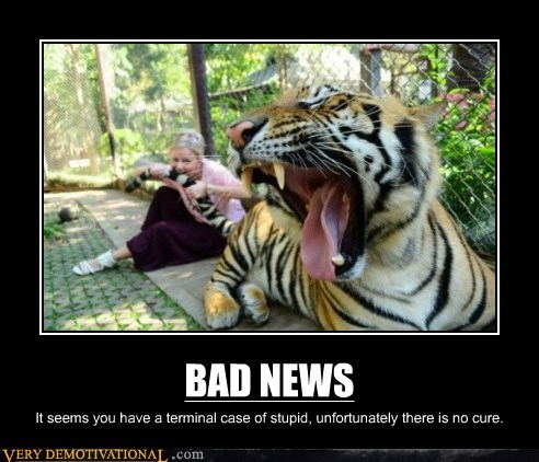 bad news tiger tail ouch