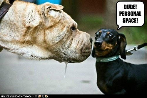 dachshund drool personal space what breed - 6648244736