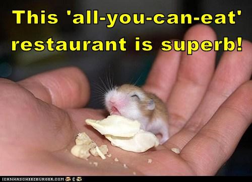 baby cute restaurant hamster food eating happy all you can eat smile - 6648581632