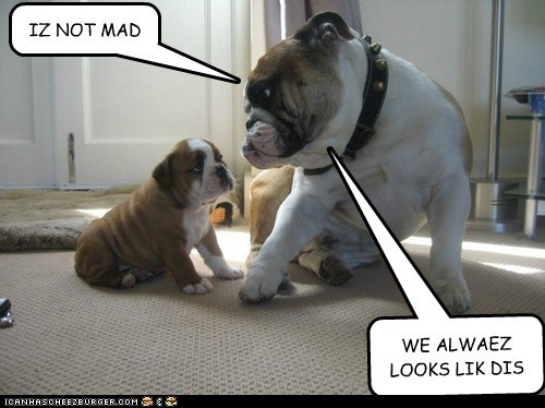 dogs baby puppy bulldogs mommy not even mad - 6648695040